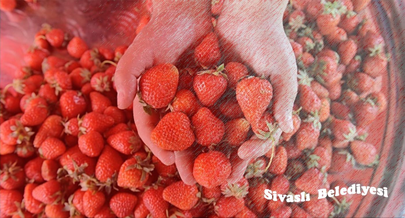 Sivasli Belediyesi Web Sitesine Hoşgeldiniz